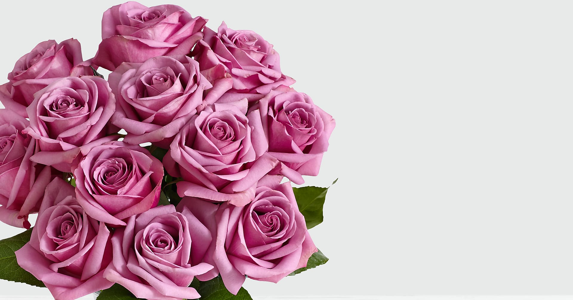 Mulberry Margarita - 12 Stems of Purple Roses - Image 2 Of 3