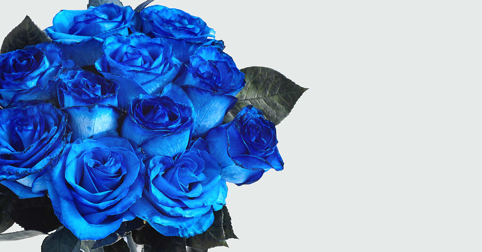 Blue Moon Roses 12 Long Stemmed Blue Dyed Roses