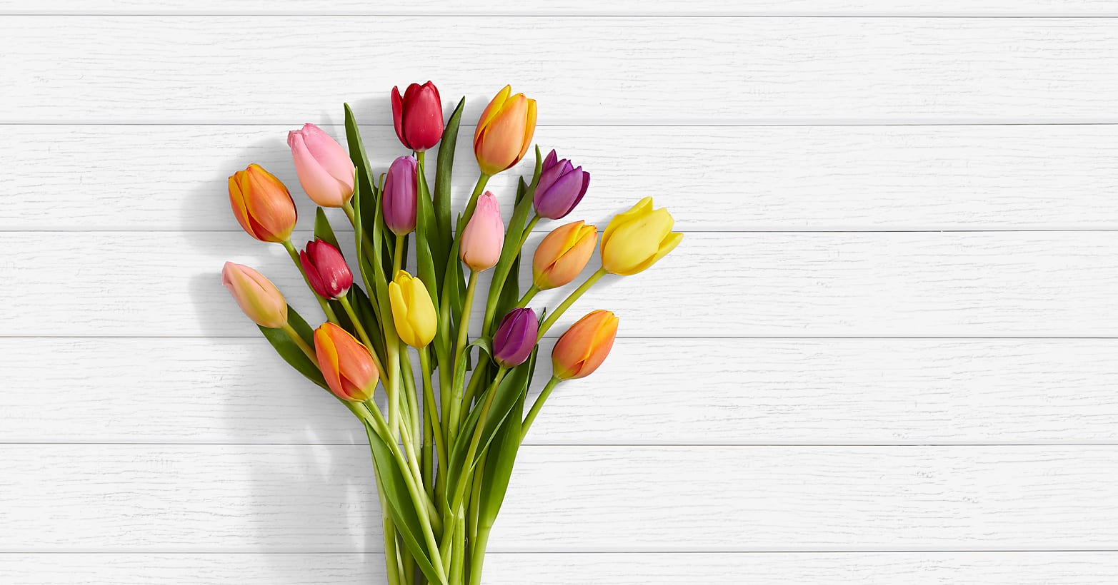 15 Multi-Colored Tulips - Image 1 Of 4
