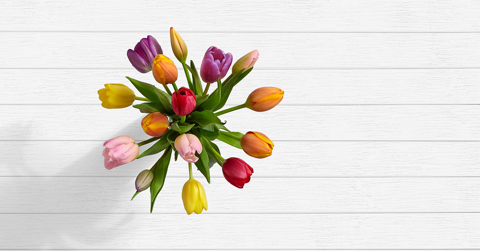15 Multi-Colored Tulips - Image 2 Of 4