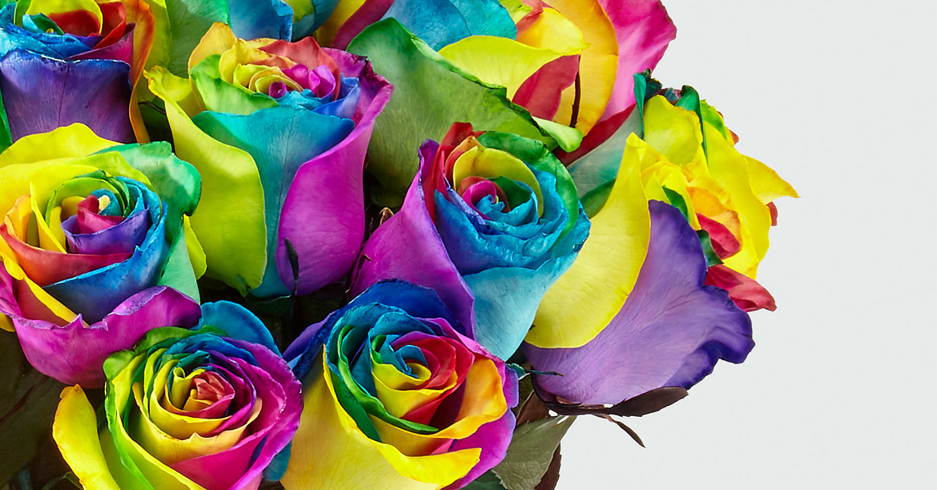 Time to Celebrate Rainbow Rose Bouquet - 24 Stems with Vase - Image 3 Of 4