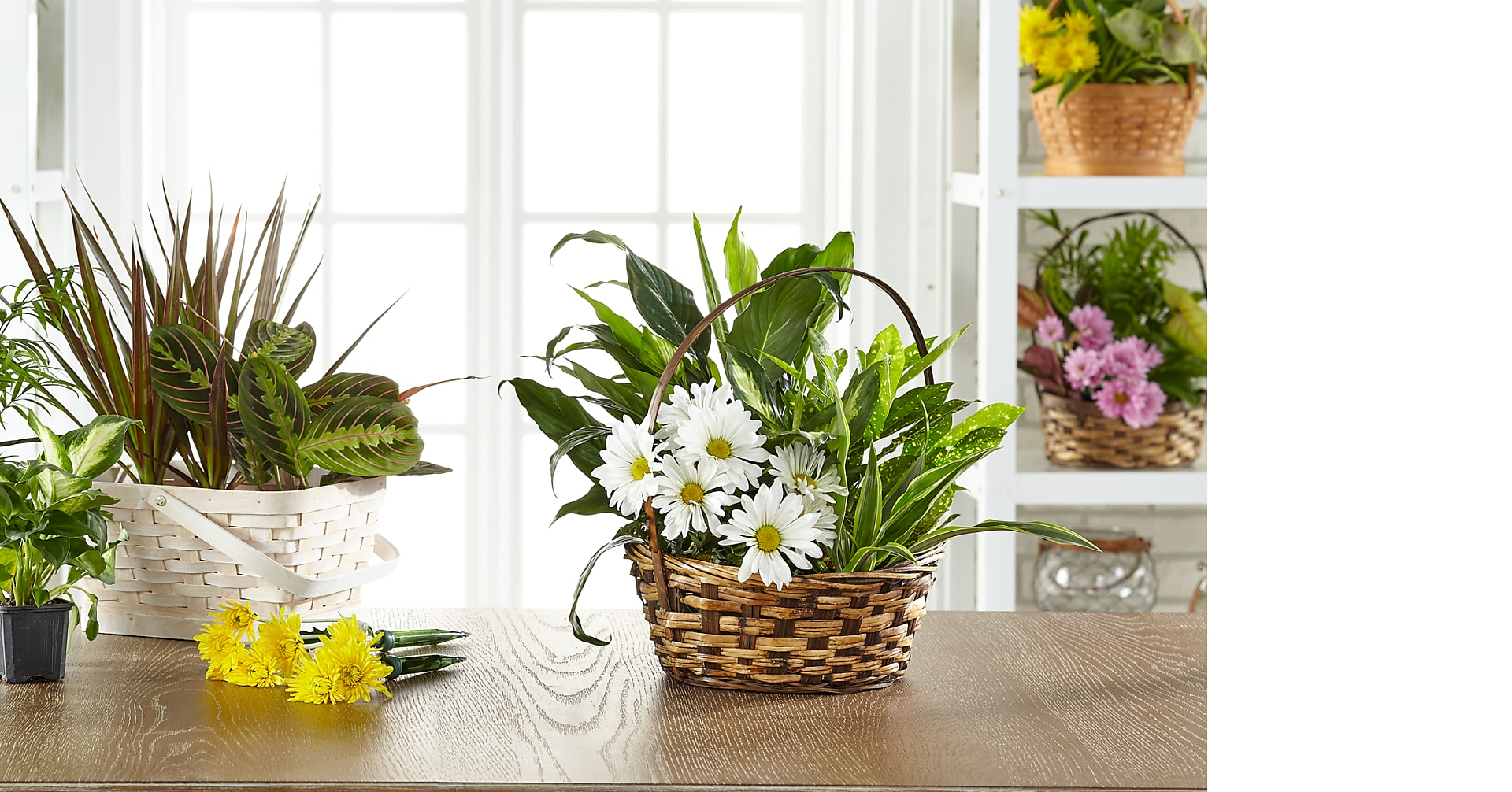 Florist Designed Dishgarden