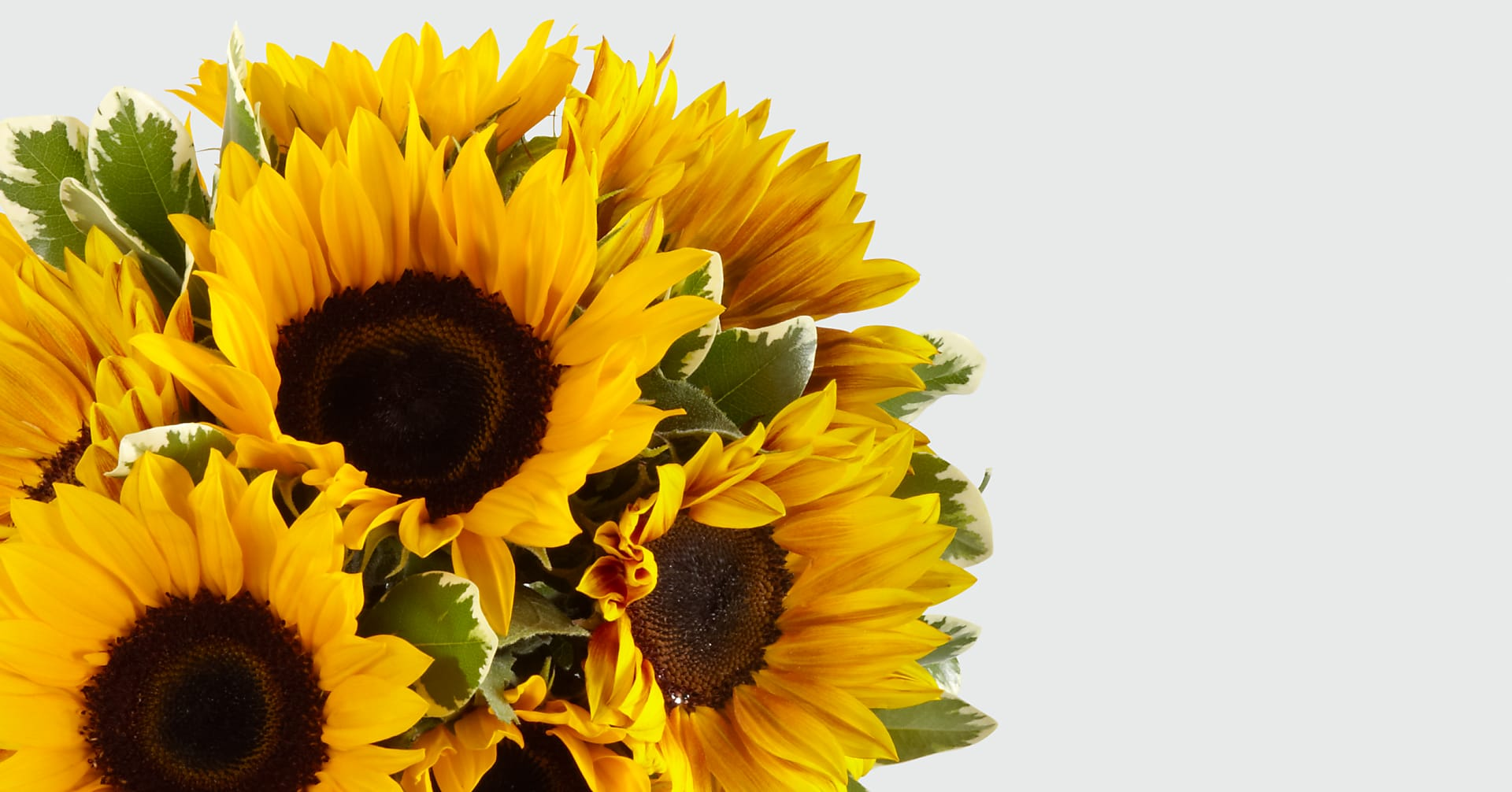 Endless Summer Sunflower Bouquet - 9 Stems with Vase - Image 4 Of 5