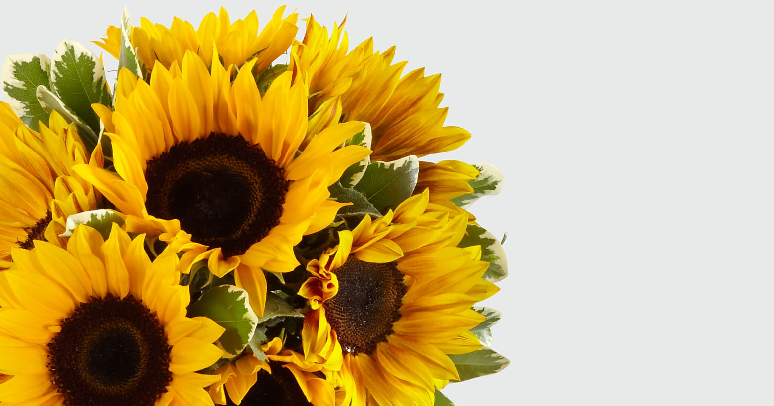 Endless Summer Sunflower Bouquet - 9 Stems with Vase - Image 4 Of 4