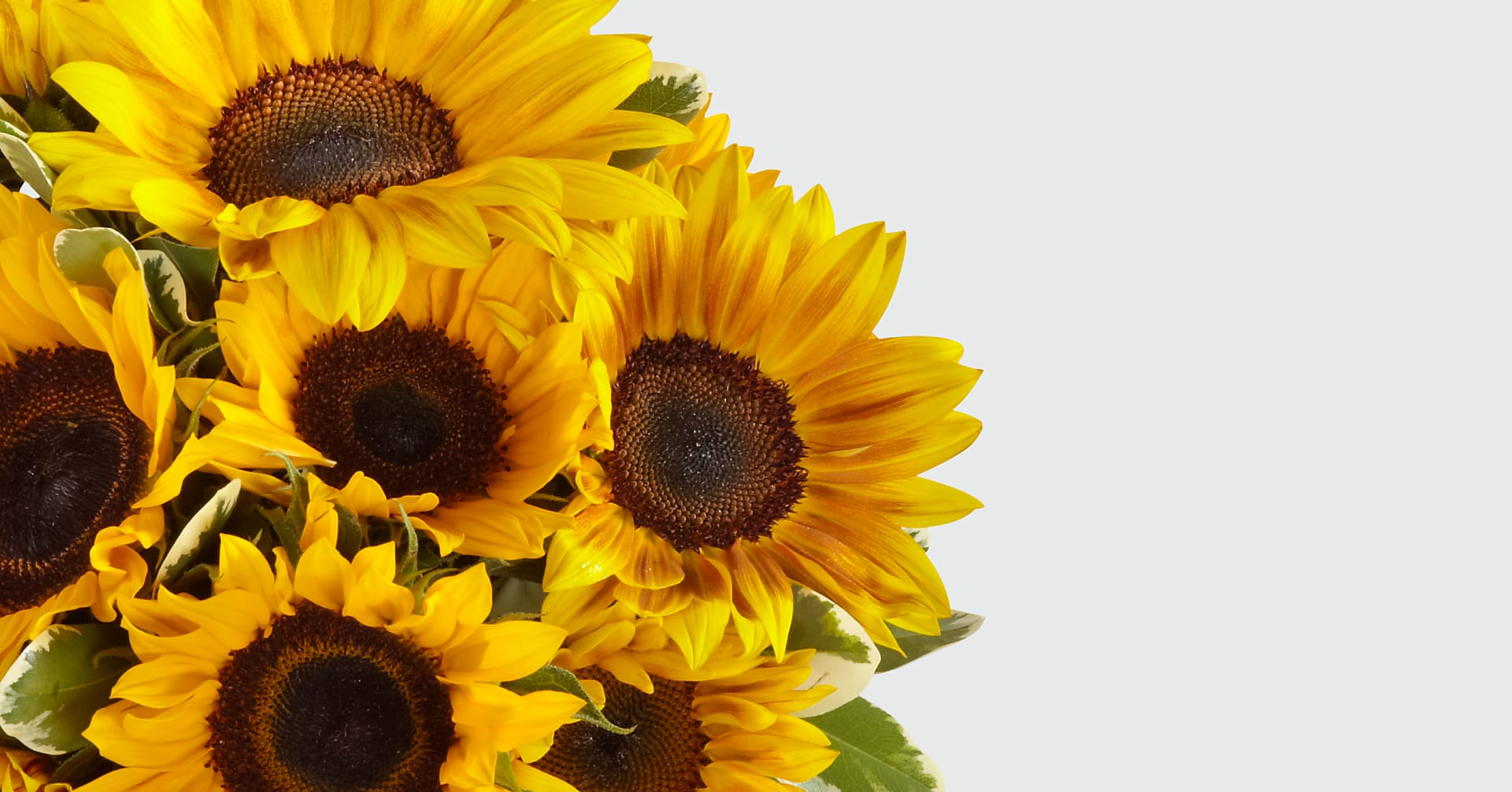 Honey Bee Sunflower Bouquet - Image 4 Of 4