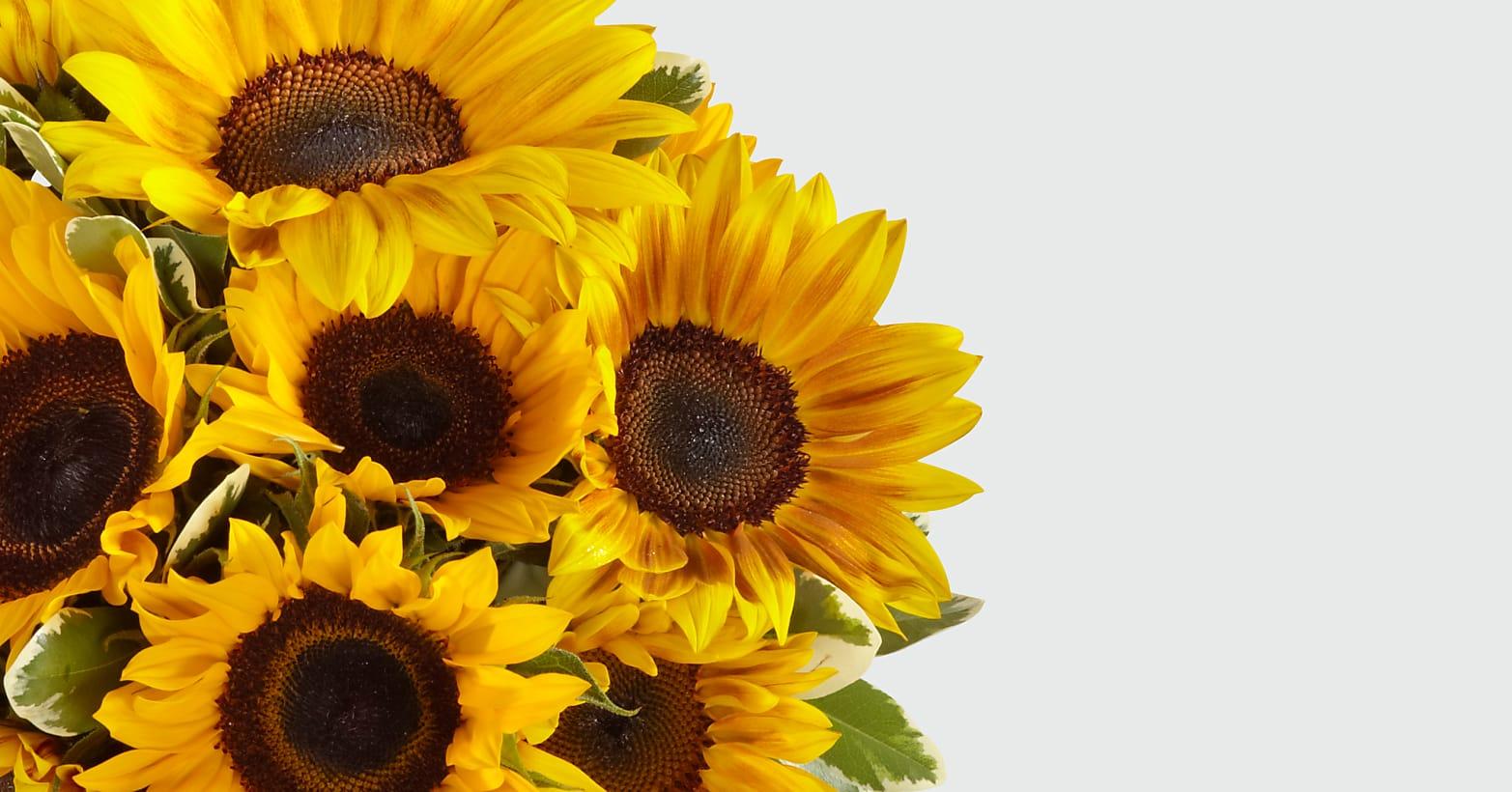 Endless Summer Sunflower Bouquet - Image 4 Of 4