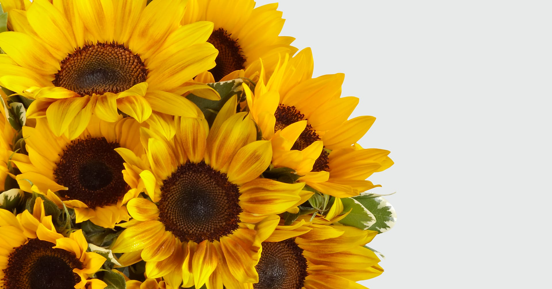 Endless Summer Sunflower Bouquet - Image 4 Of 5