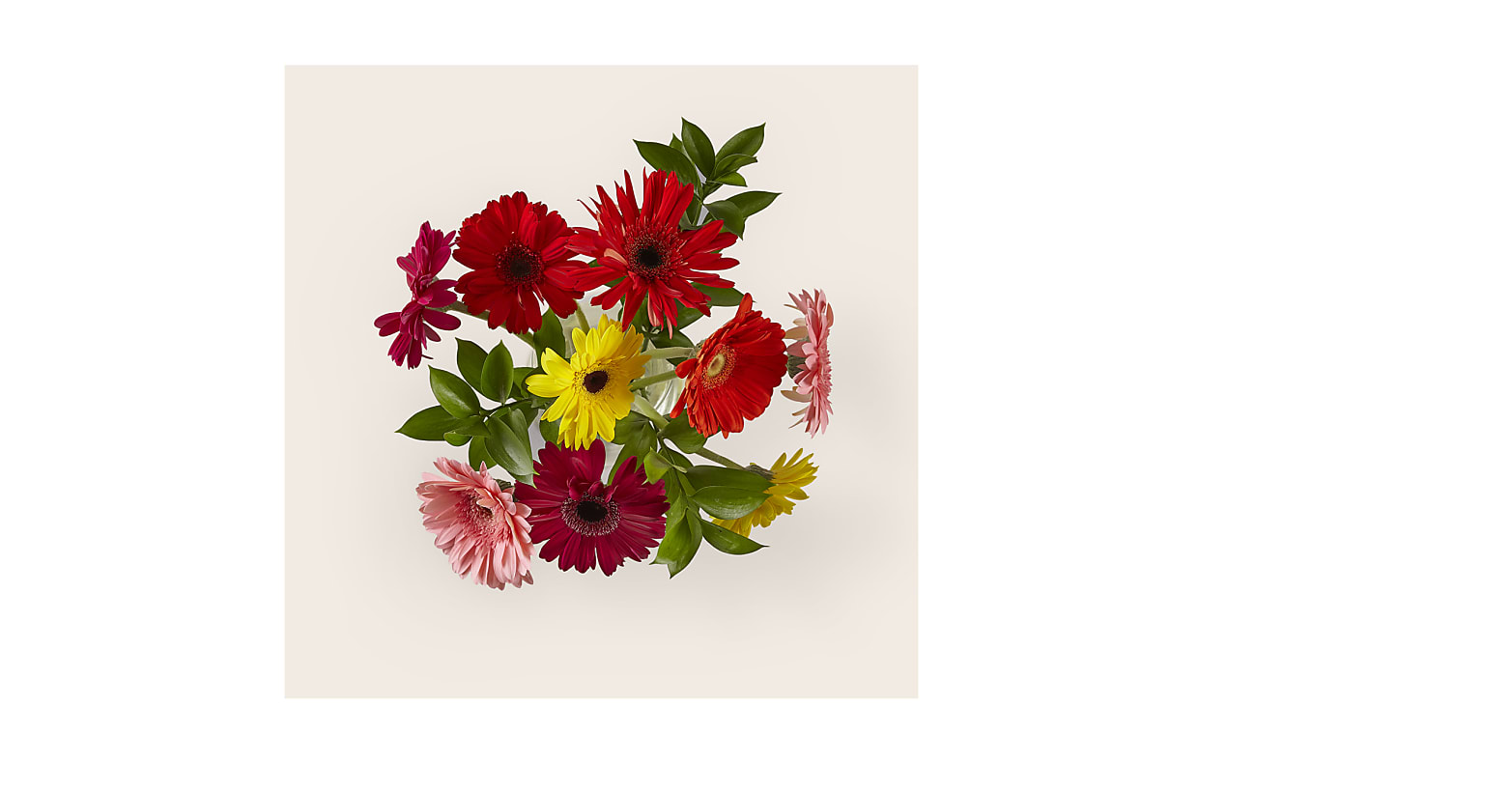 Sunkissed Gerbera Bouquet - Image 2 Of 2