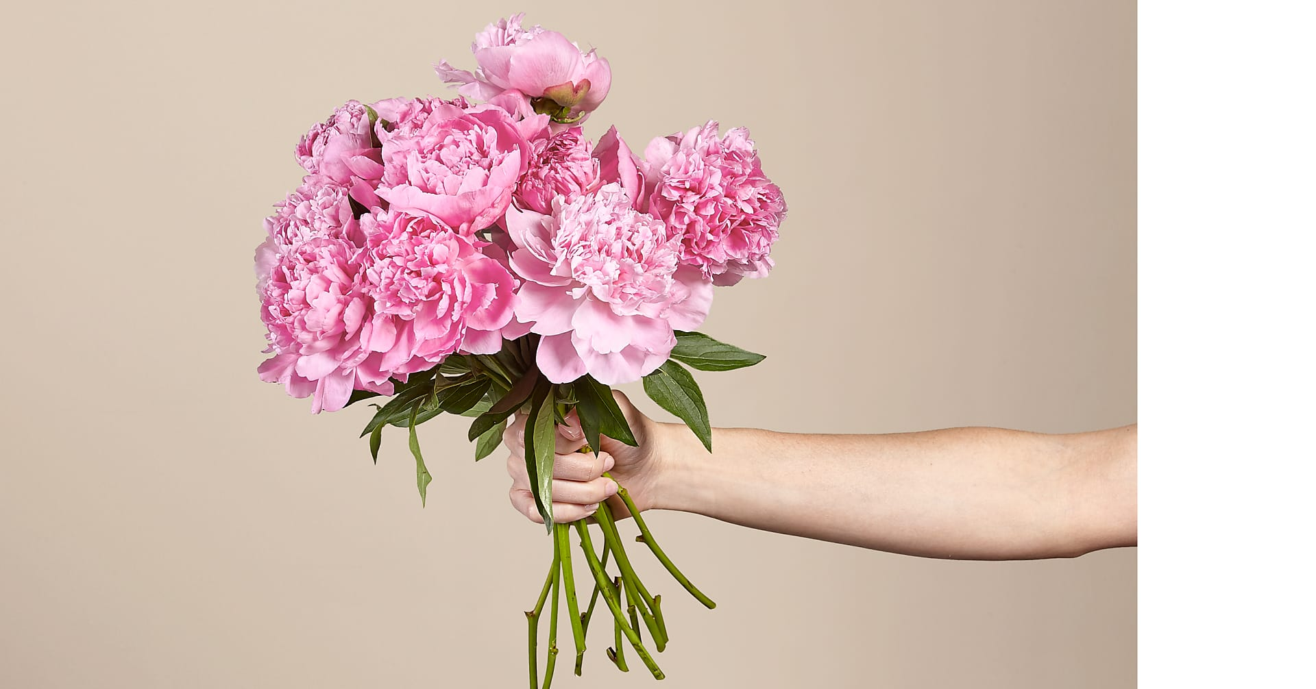 In Full Bloom Peony Bouquet - 10 Stems - No Vase - Image 1 Of 2