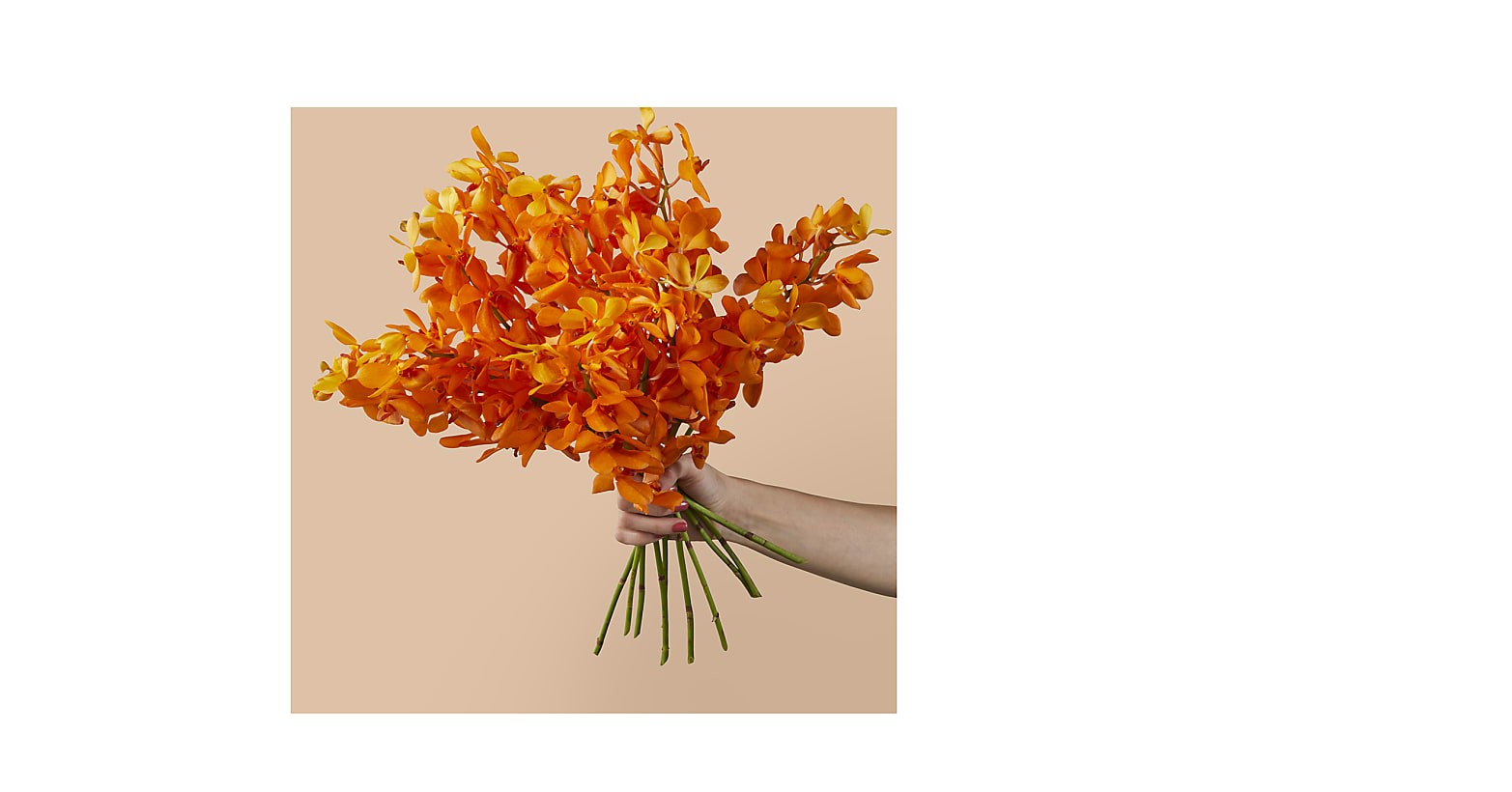 Pick of the Patch Orchid Bouquet