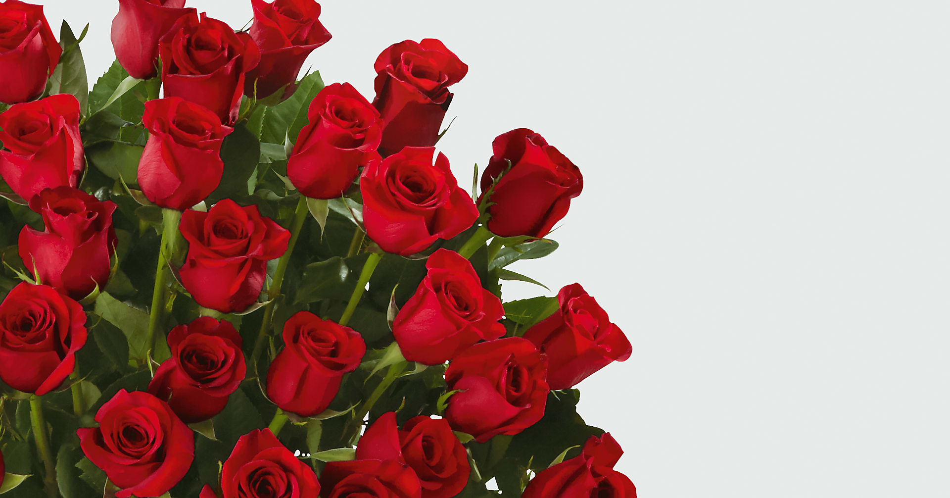 Fifty Long Stem Red Roses of Romance - Image 2 Of 2