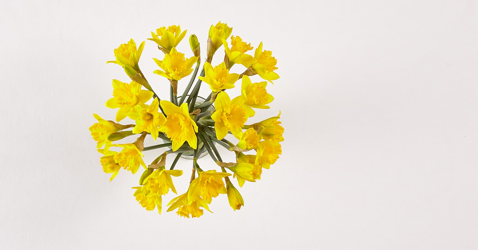 Yellow, Gorgeous Daffodil Bouquet - Image 2 Of 2