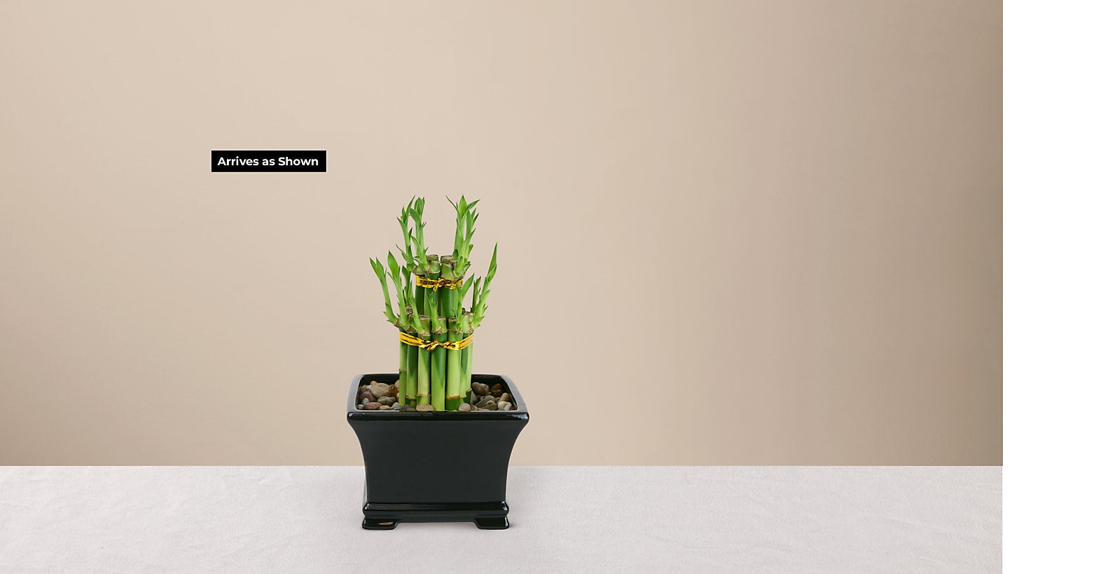 Double Lucky Bamboo - Image 3 Of 4