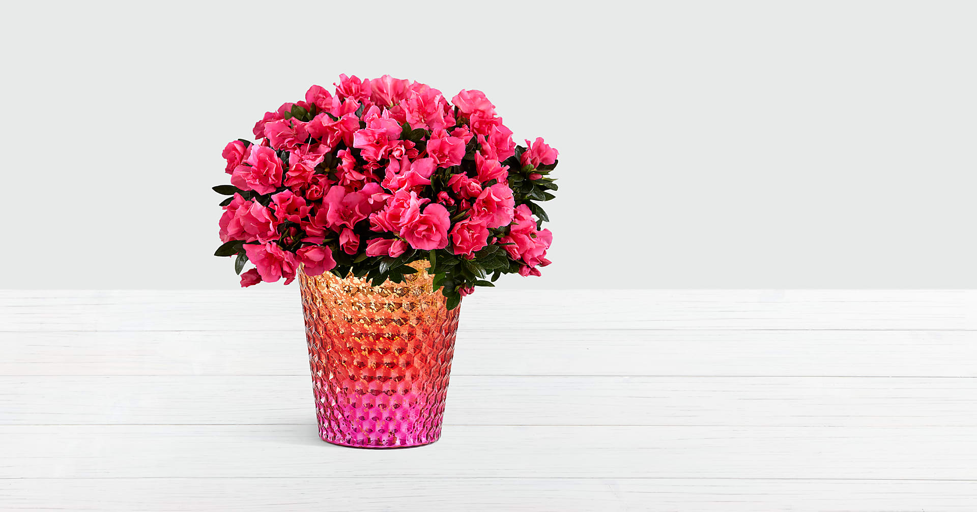 Hot Pink Azalea Plant in Wanderlust Skies Mercury Glass Planter - Image 1 Of 2