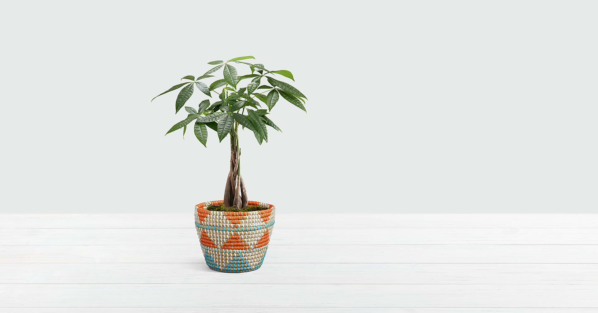 Braided Money Tree in Southwest Print Basket - Image 1 Of 2