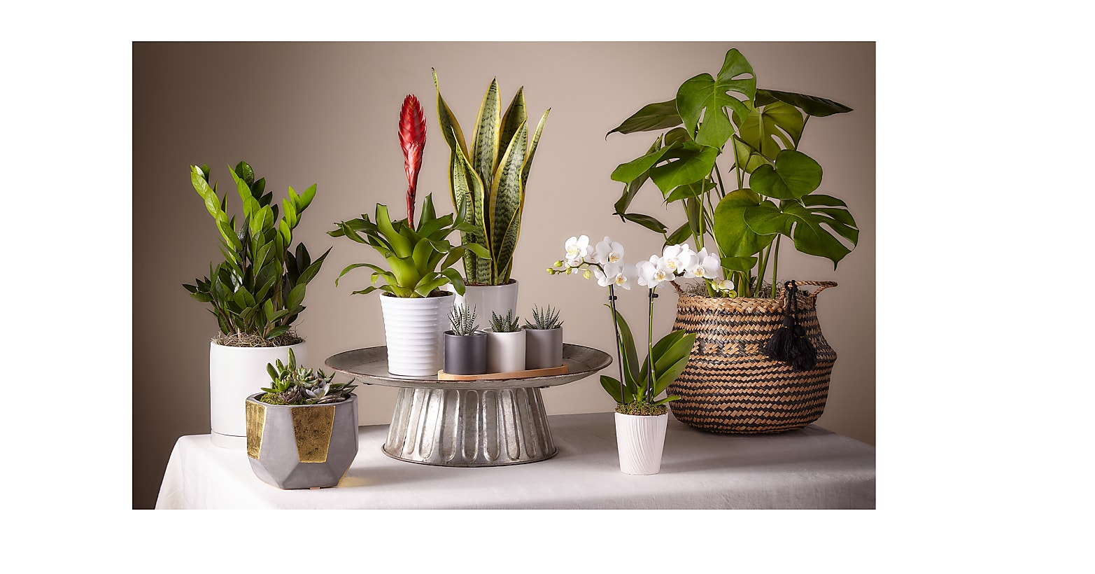 Monstera in Basket - Image 3 Of 3