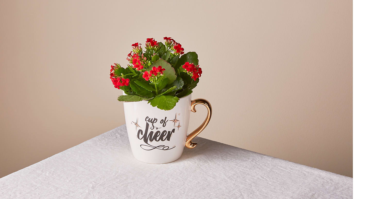"4.5"" Red Kalanchoe - Image 1 Of 3"