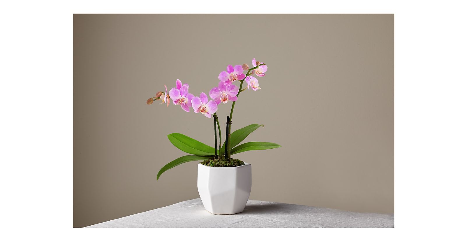 Pink Mini Orchid - Image 1 Of 2