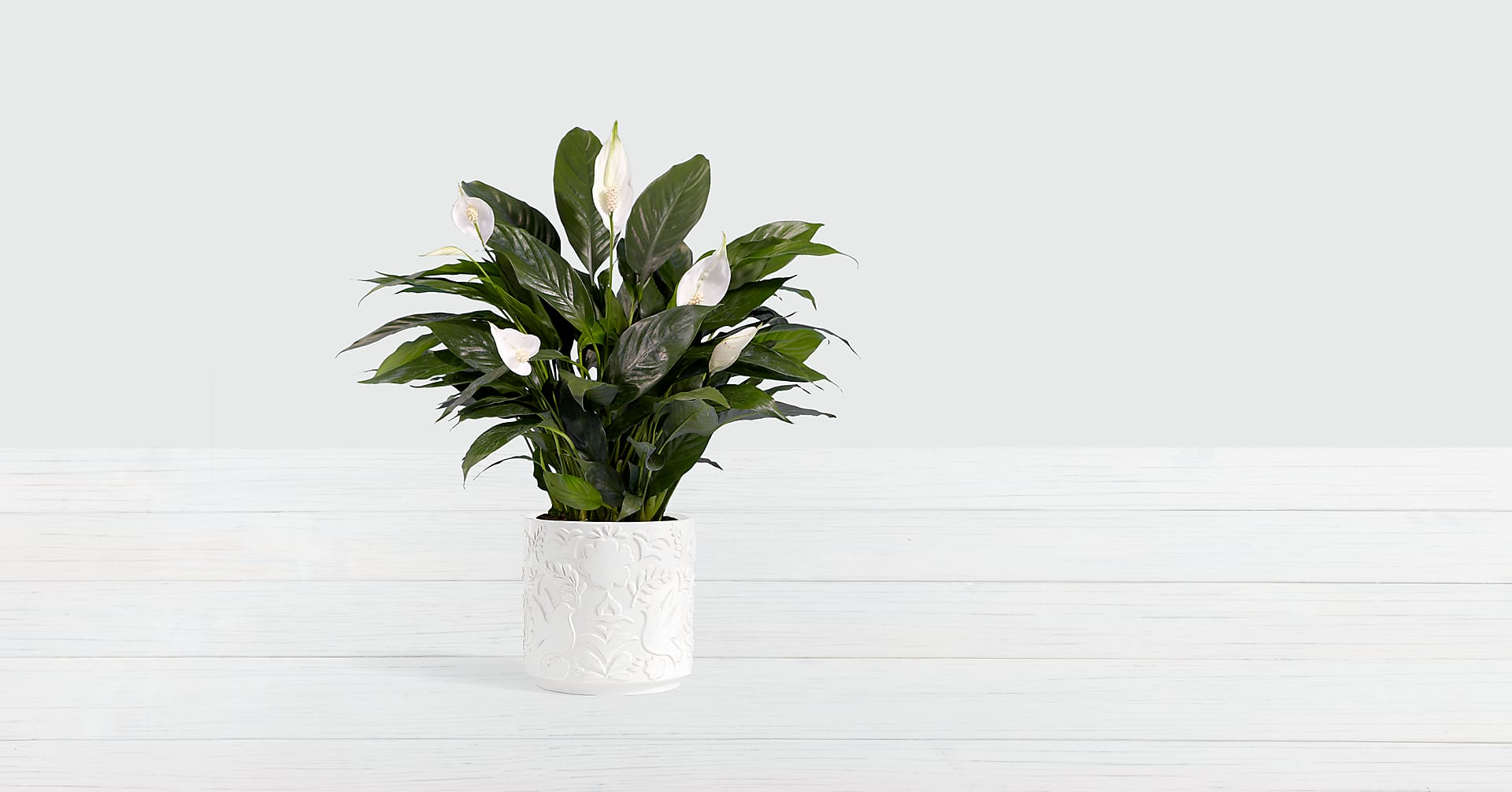 Lush Tropical Peace Lily in Dove Sympathy Planter - Image 1 Of 3