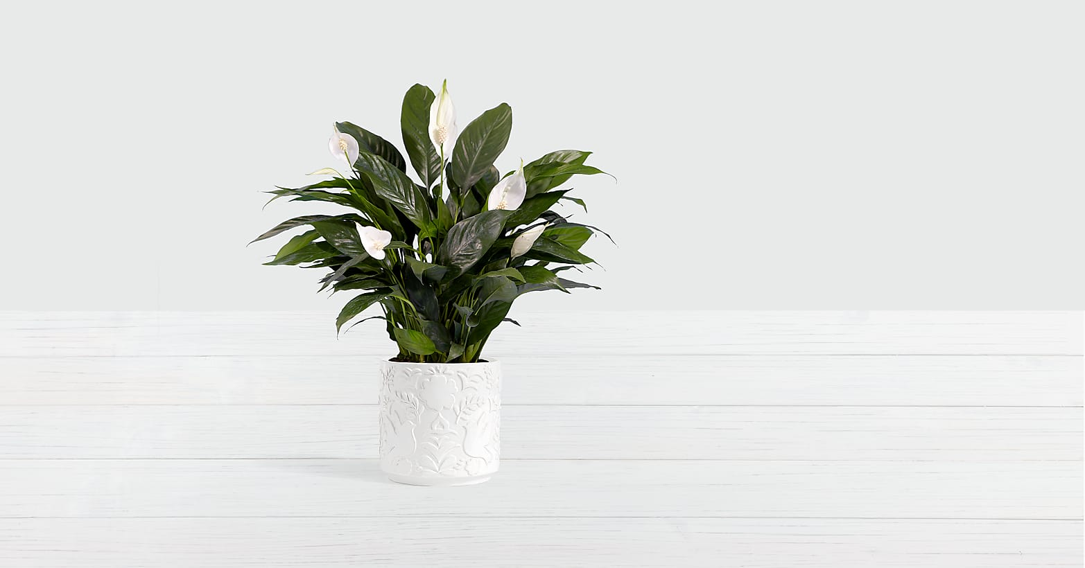 Lush Tropical Peace Lily - Image 1 Of 3