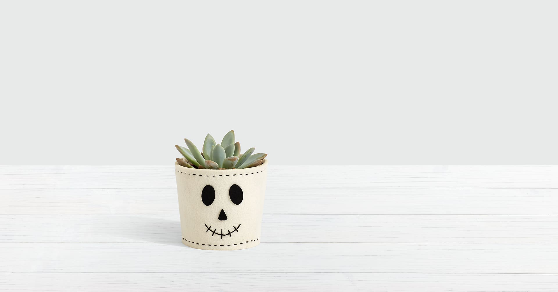 Spooky Skeleton Succulent - Image 1 Of 2
