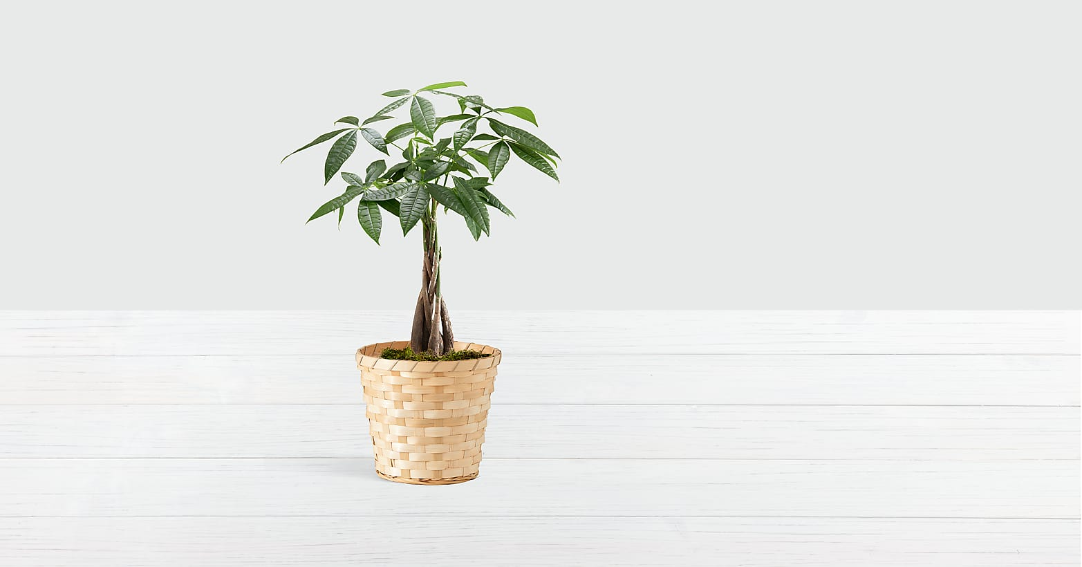 Braided Money Tree in Woven Basket