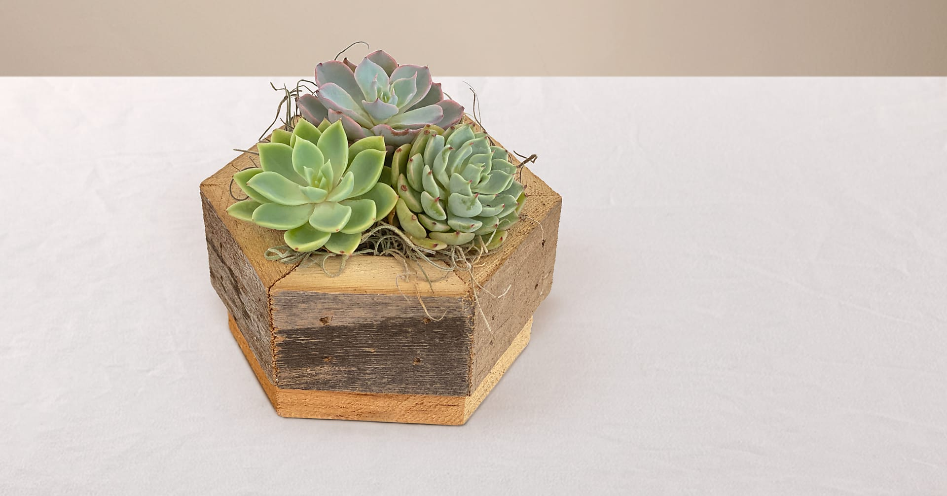 Zen Succulent Hexagon Garden - Image 1 Of 2