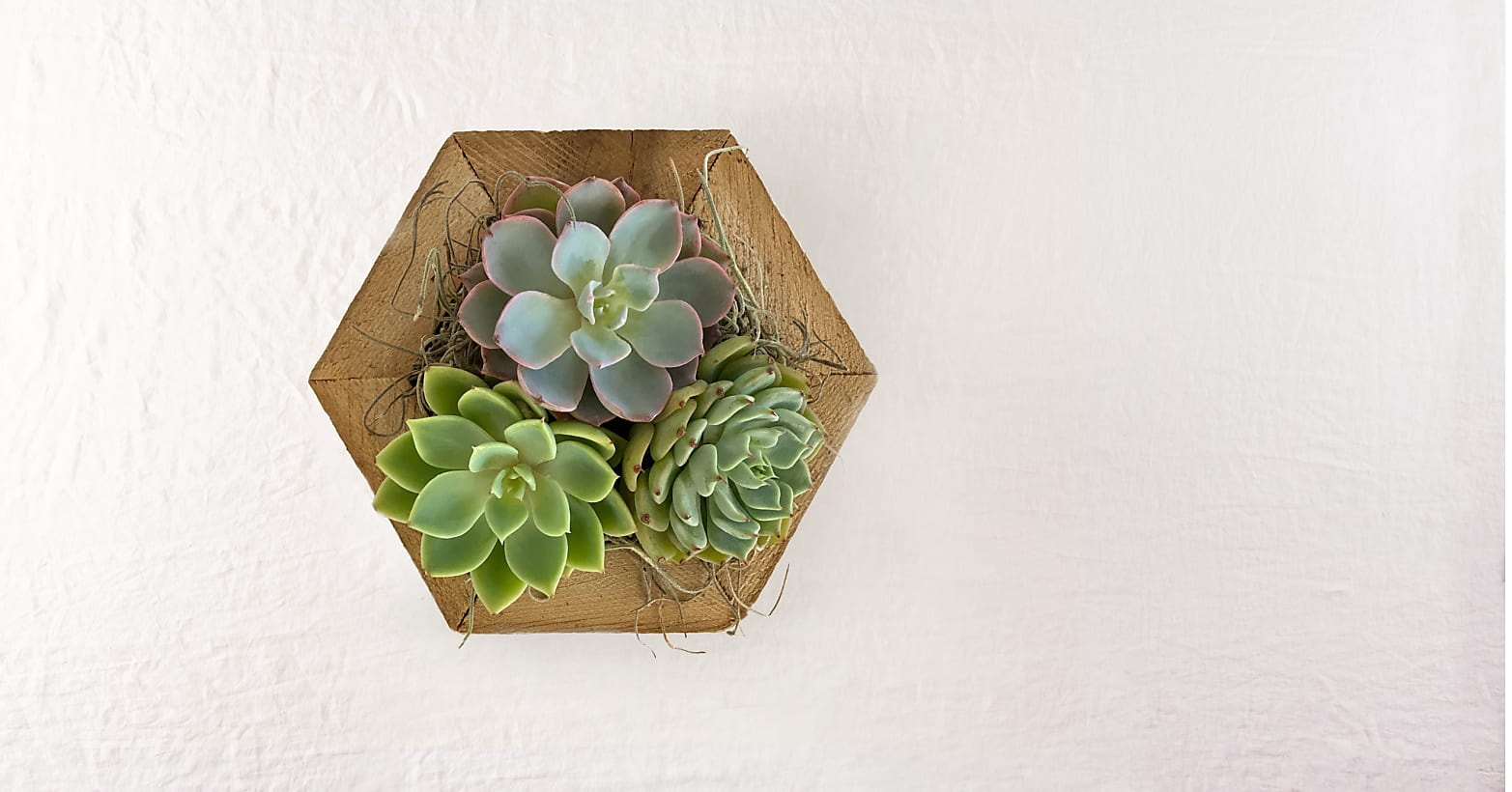 Zen Succulent Hexagon Garden - Image 2 Of 2
