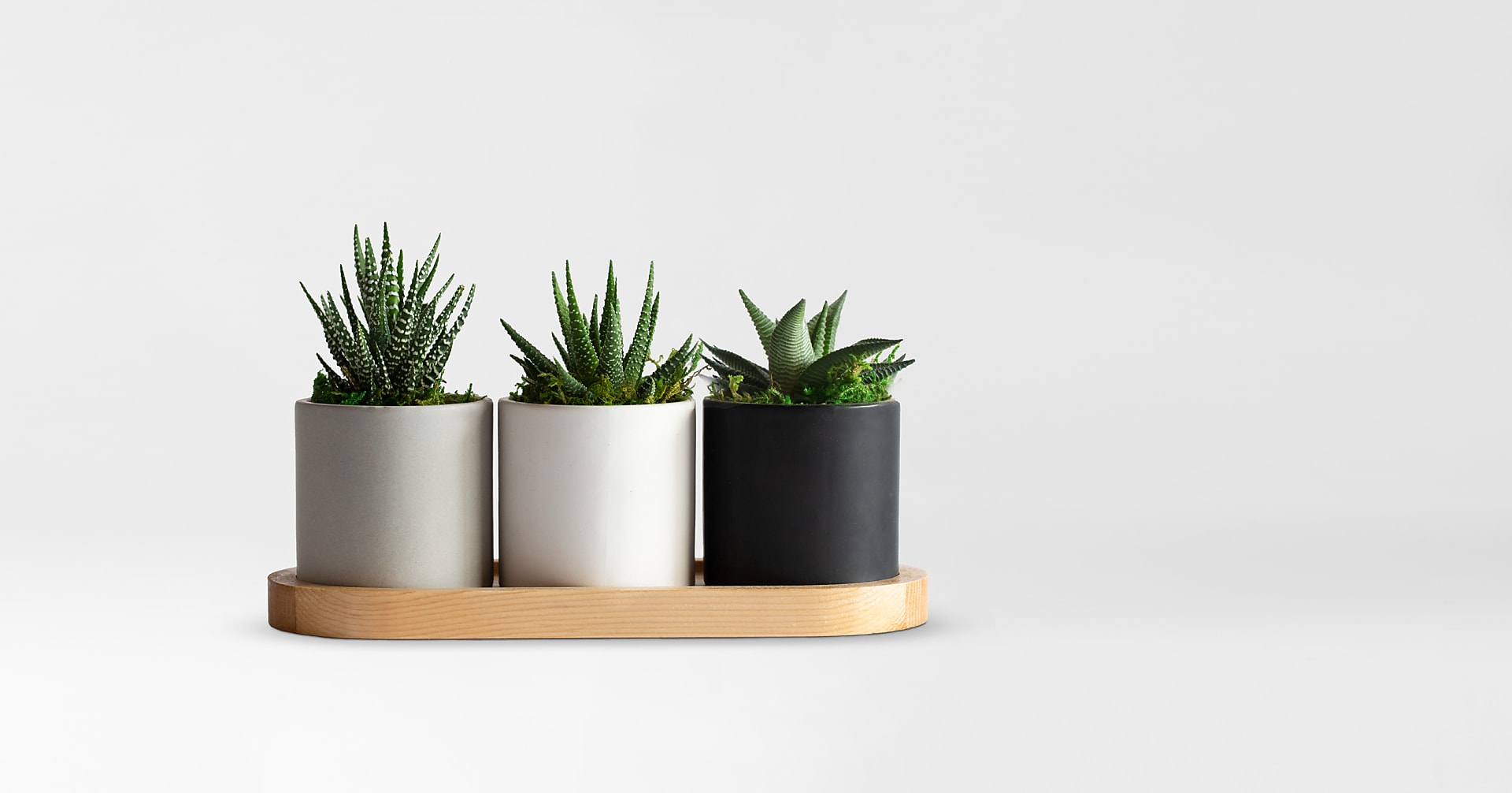 Tower Succulents Trio - Image 1 Of 2