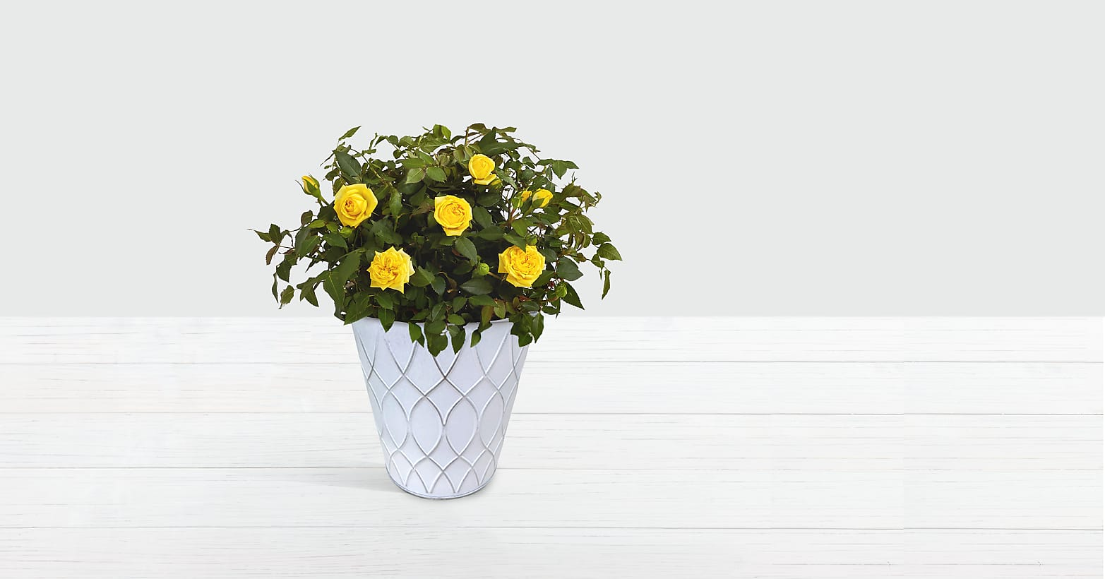 Potted Yellow Roses in Tin