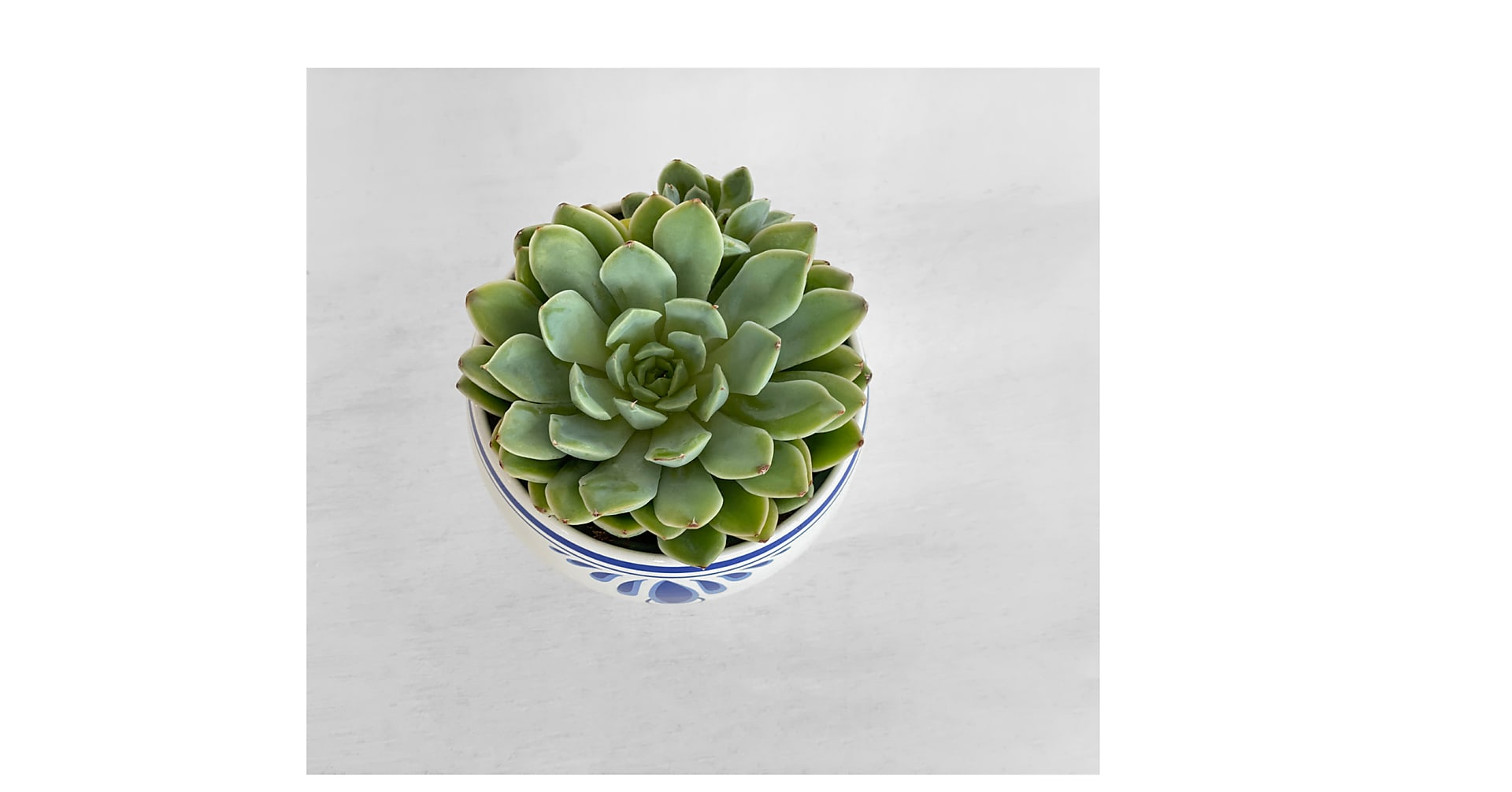 Tranquil Succulent - Image 2 Of 2