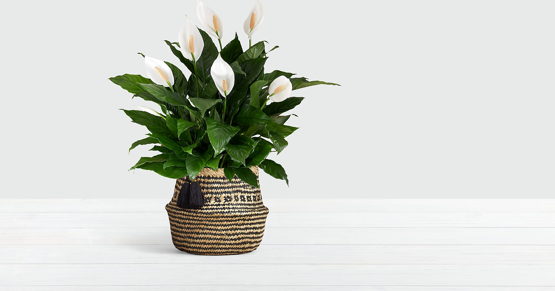 Peace Lily in Diamond Print Basket