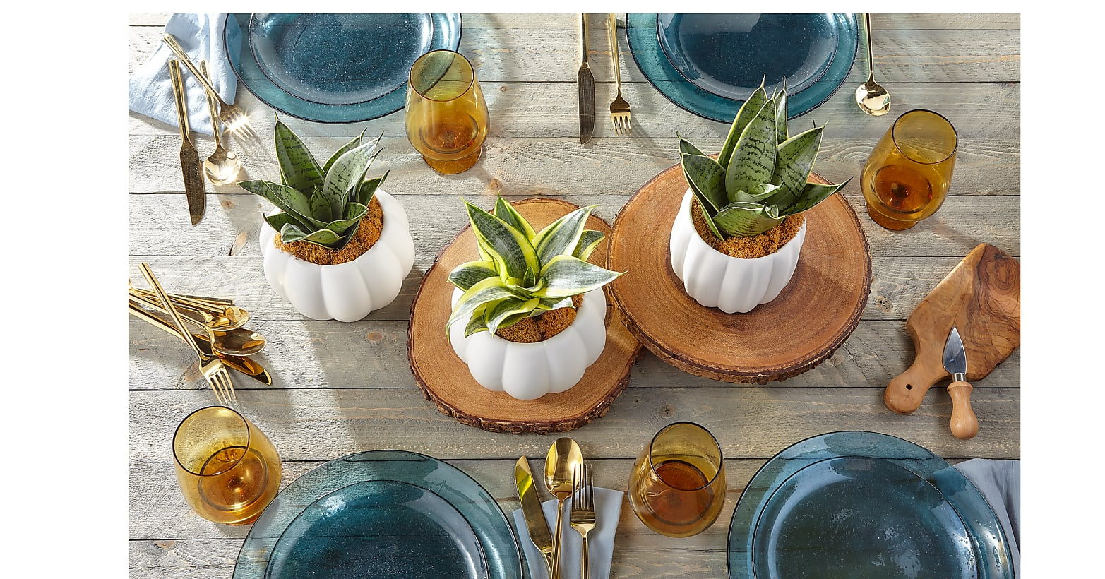 Fresh & Rustic Snake Plant Trio - Image 2 Of 6