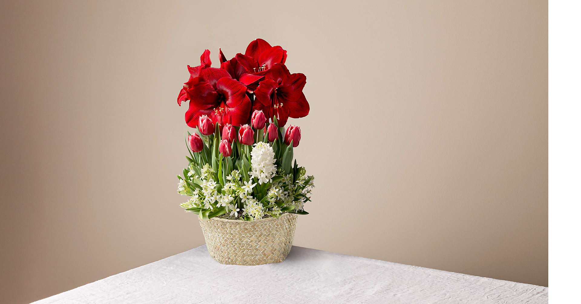 Blooming Love Amaryllis Bulb Garden - Image 1 Of 2