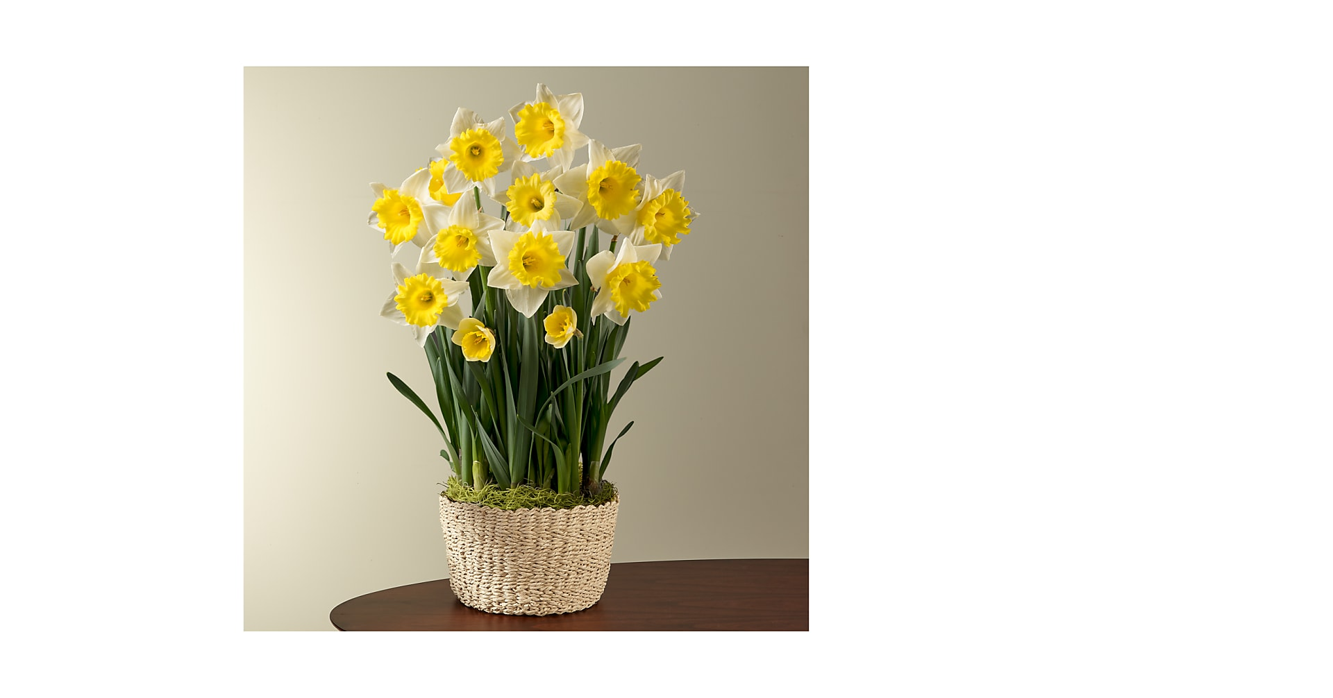 So Golden Daffodil Bulb Garden - Image 1 Of 3