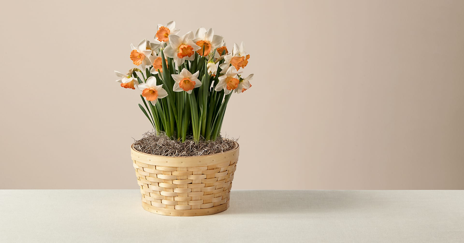 Orange You Glad Daffodil Garden - Image 1 Of 3