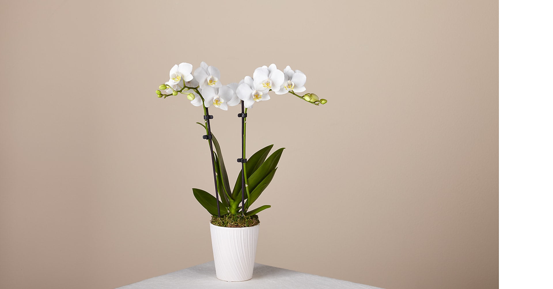 Bliss White Orchid - Image 1 Of 3