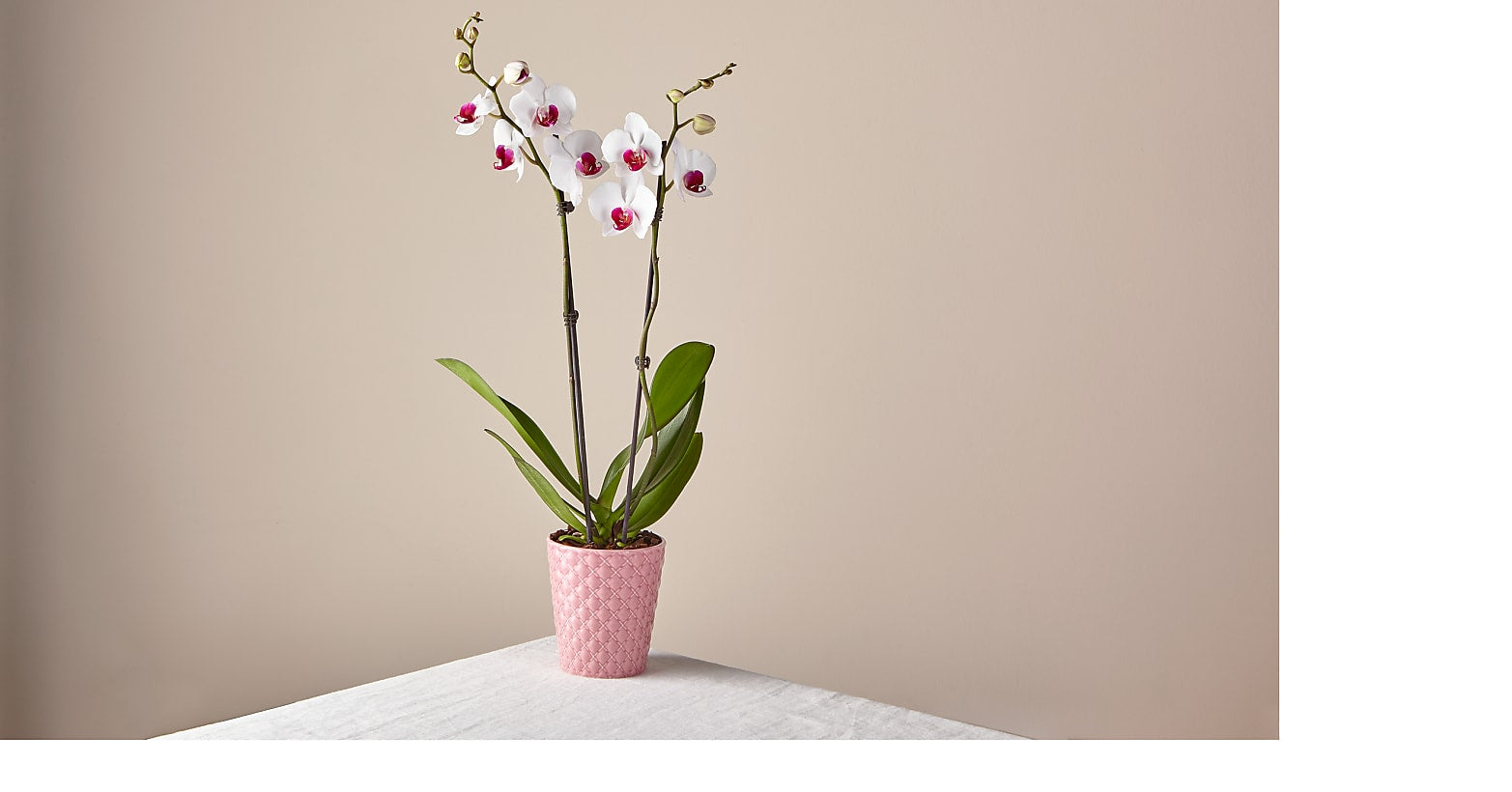 Romantique Pink Orchid - Image 1 Of 2