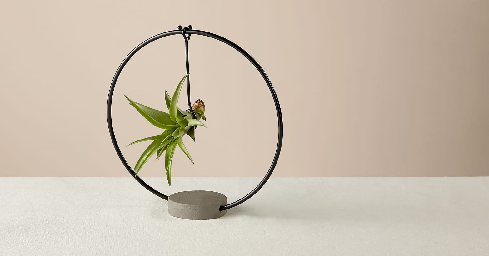 Hanging Air Plant - Image 2 Of 2