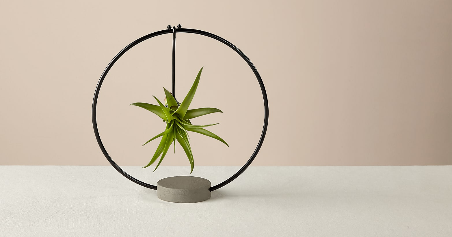 Hanging Air Plant - Image 1 Of 2