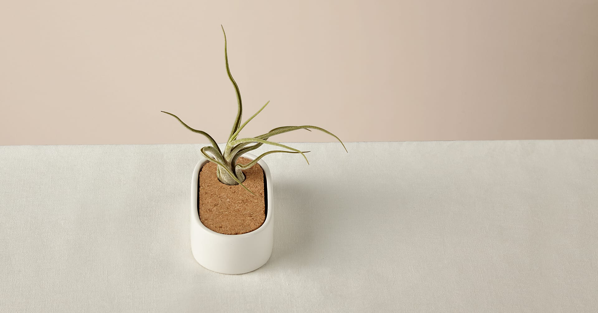 Free Spirit Air Plant - Image 3 Of 3