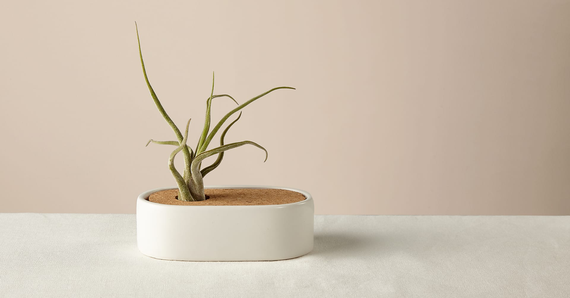 Free Spirit Air Plant - Image 1 Of 3