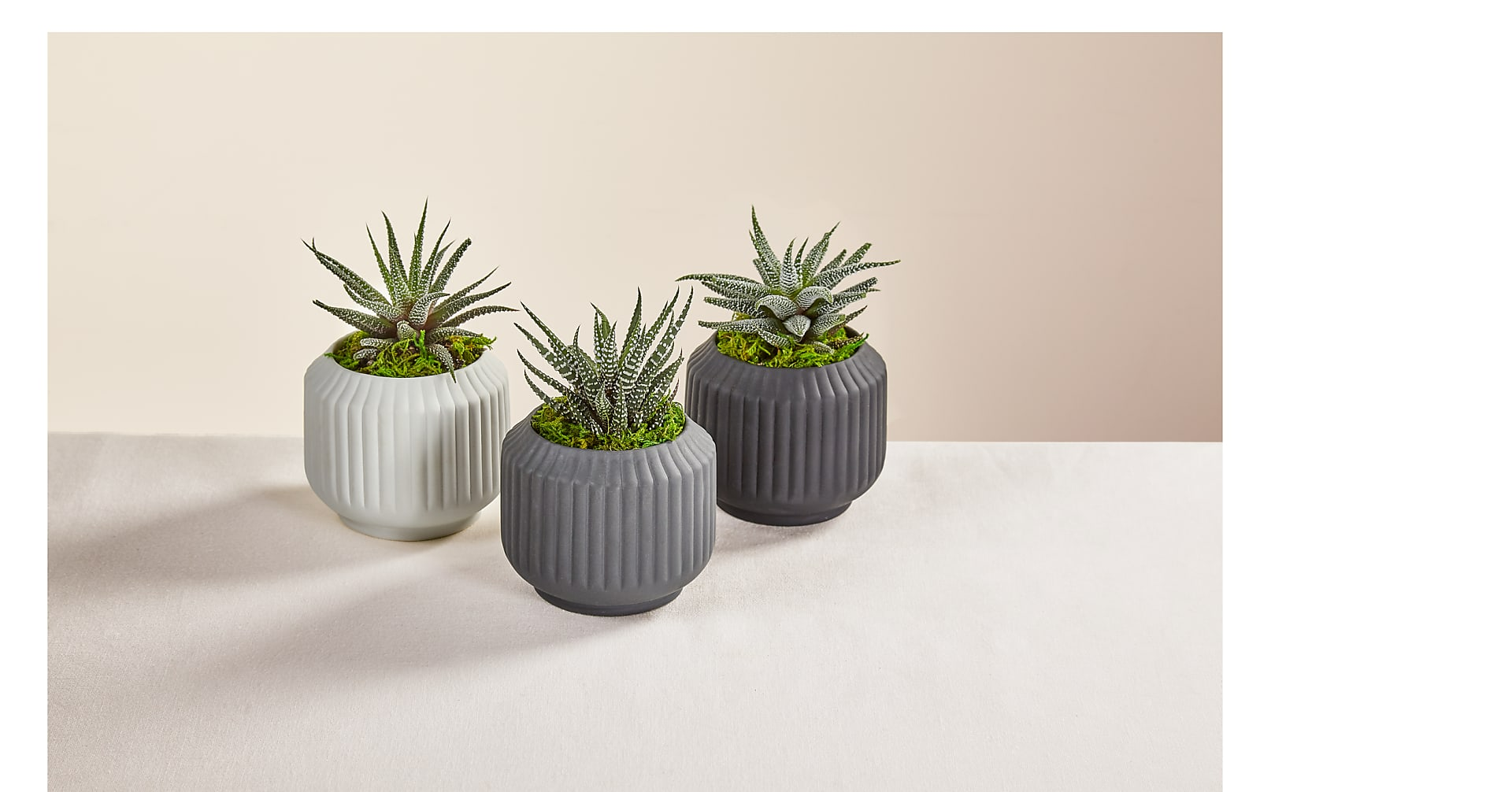 Contemporary Succulent Trio