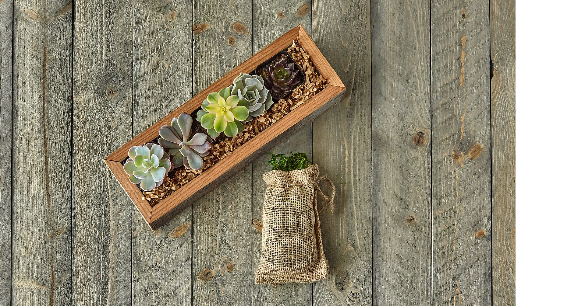 Succulent Garden DIY Kit - Image 4 Of 8