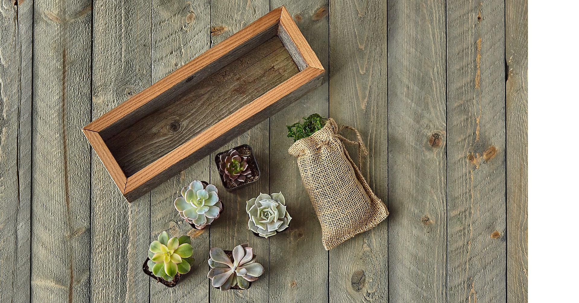 Succulent Garden DIY Kit - Image 5 Of 8