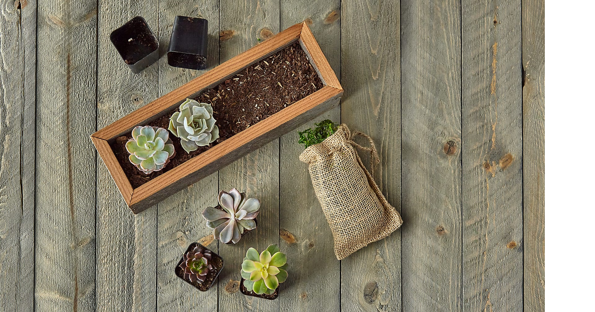 Succulent Garden DIY Kit - Image 6 Of 8