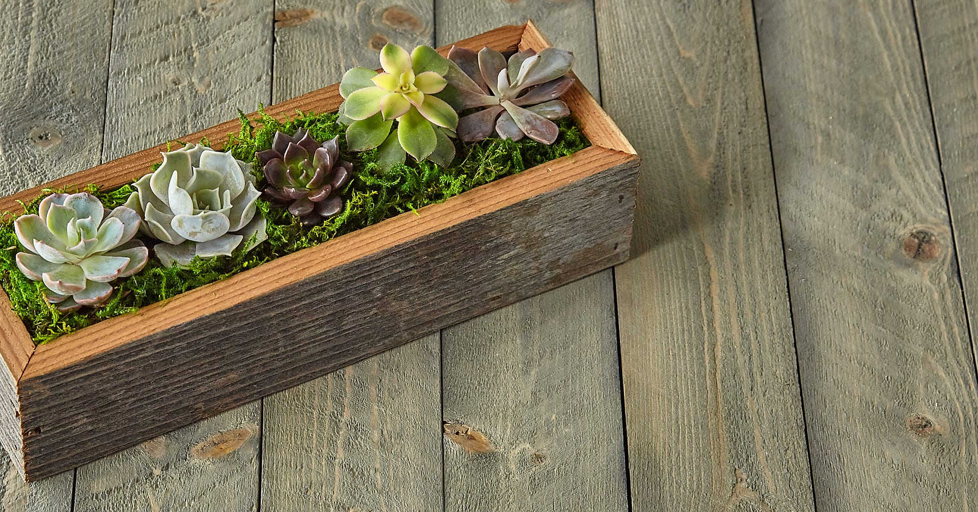 Succulent Garden DIY Kit - Image 1 Of 8
