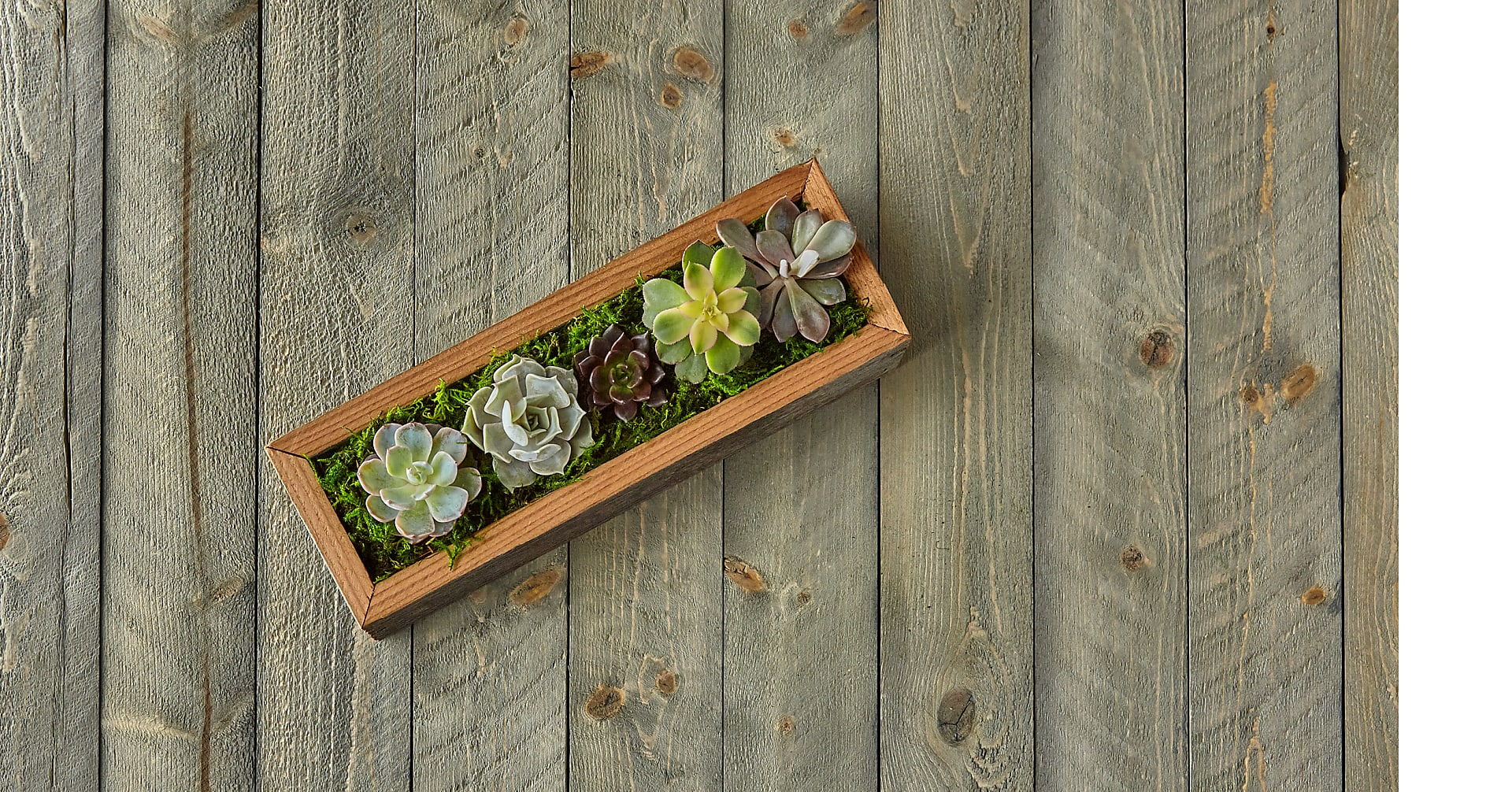 Succulent Garden DIY Kit - Image 2 Of 8