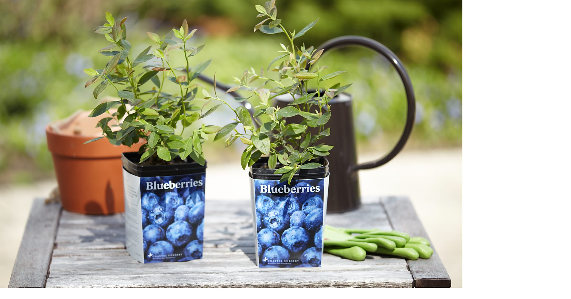 Blueberry Garden Kit - Image 3 Of 4