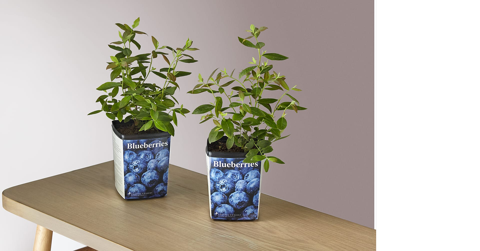Blueberry Garden Kit - Image 1 Of 4